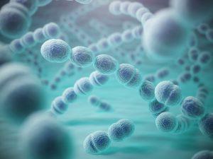 Streptococcus pneumoniae or pneumococcus bacterias
